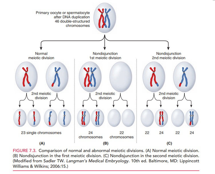 Abnormalities in Chromosome Number