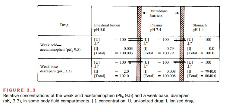 Absorption of Drugs From the Alimentary Tract