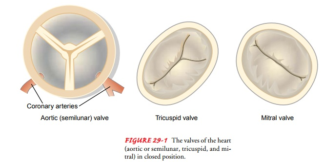 Acquired Valvular Disorders
