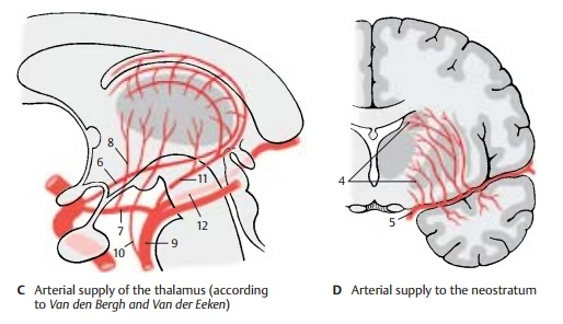 Areas of Blood Supply - Cerebrovascular Systems