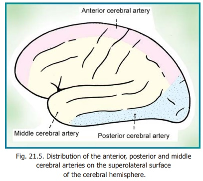Arterial Supply of the Cerebral Cortex - Blood Supply of Central Nervous System