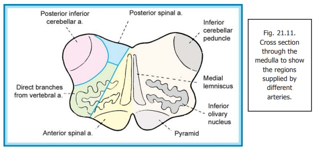 Arterial Supply of the Brainstem - Blood Supply of Central Nervous System