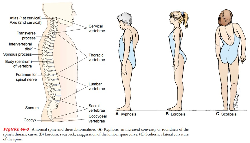 Assessment of Musculoskeletal Function: Physical Assessment
