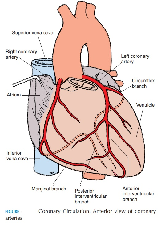 a description of angina refers to the pain a rising from lack of adequate blood supply to the heart  Coronary heart diseases ppt of the coronary arteries that prevents adequate blood supply to the heart muscle is called chest pain (angina.