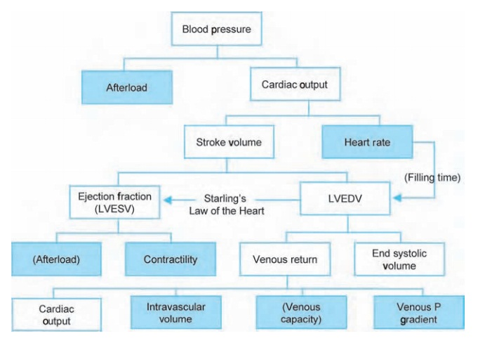 Blood pressure and its determinants