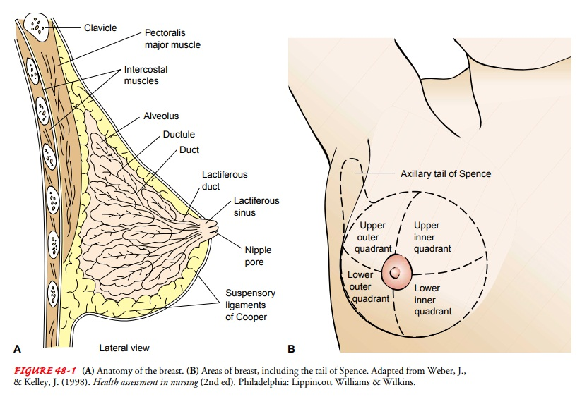 Breast - Anatomic and Physiologic Overview