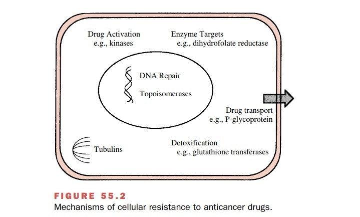 Cancer Chemotherapy: Drug Resistance