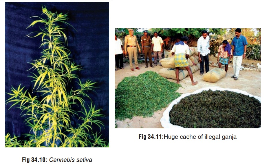 Cannabis - Substances of Dependence and Abuse