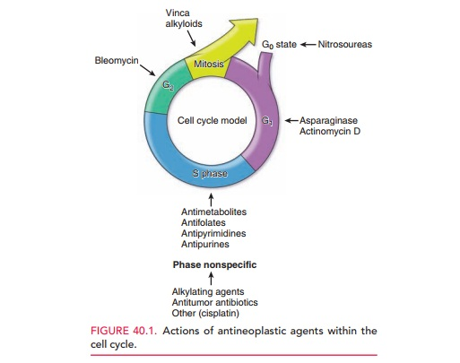 Cell Cycle and Cancer Therapy