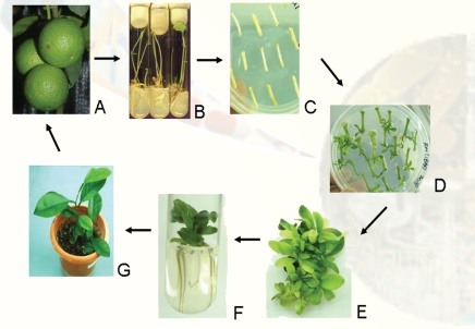 Cell and Tissue Culture Techniques