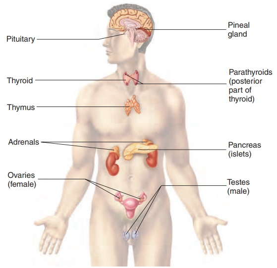 Characteristics of the Endocrine System