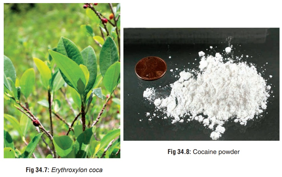 Cocaine - Substances of Dependence and Abuse