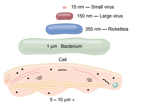 Comparison of the Animal Cell with Precellular Forms of Life