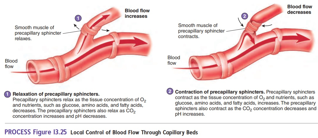 Control of Blood Flow in Tissues