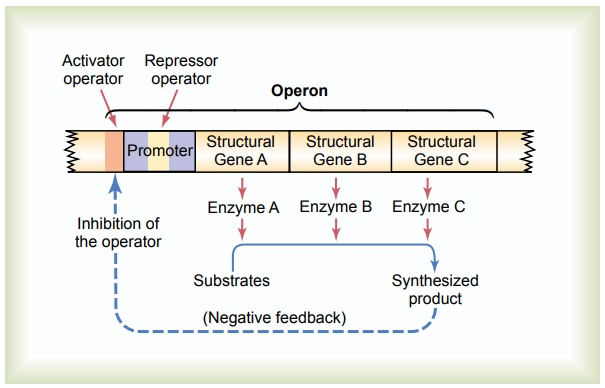 Control of Gene Function and Biochemical Activity in Cells