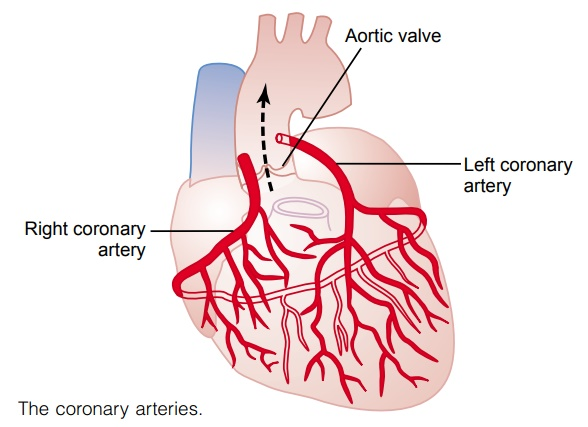 coronary flow articles