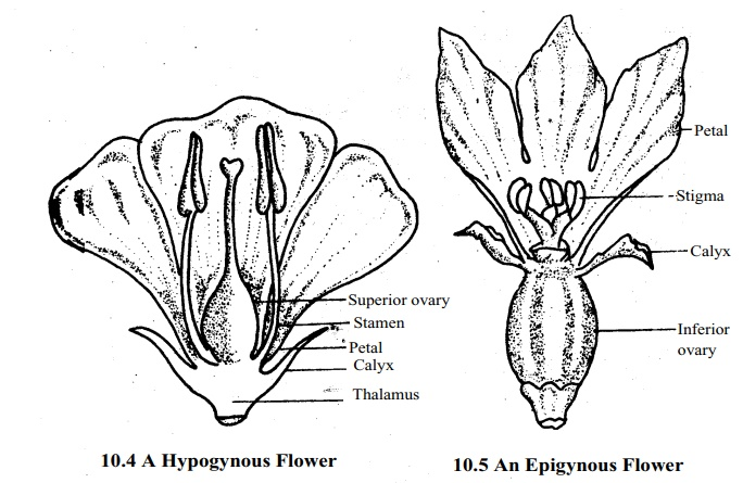 Different kinds of Flower