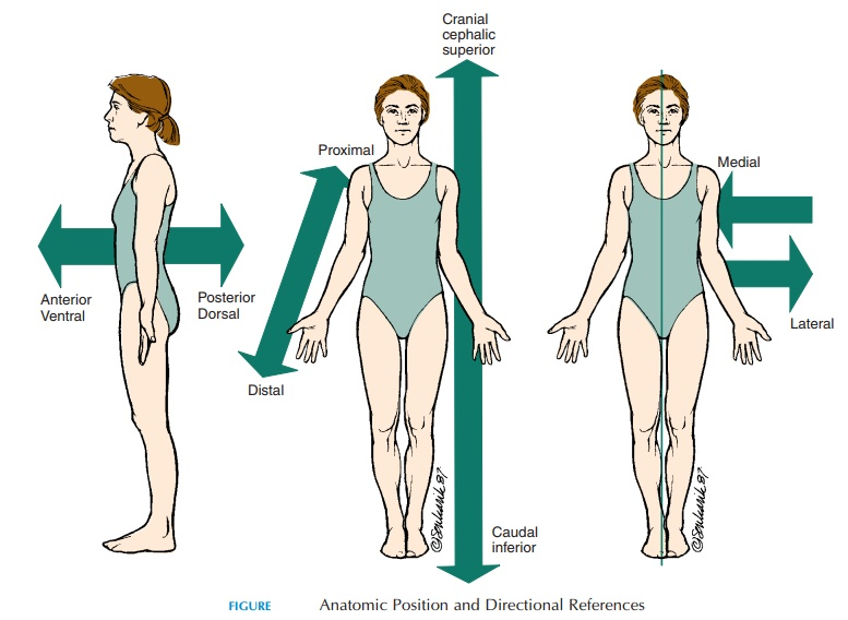 Directional References - Human Anatomy and Physiology