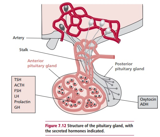 Disorders of Pituitary Function
