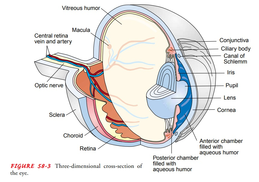 Eye - Anatomic and Physiologic Overview