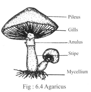 Fungi: Structure and Reproduction