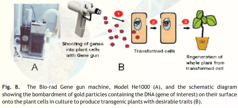 Gene transfer methods in plants