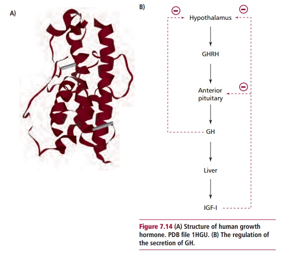 Growth Hormone Disorders