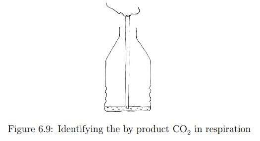 Identification of Carbon Dioxide in Exhaled Air
