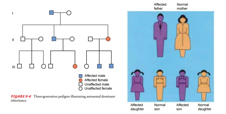 Inheritance Patterns in Families - Genetics Concepts