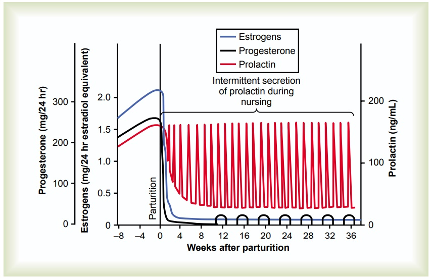 Initiation of Lactation-Function of Prolactin