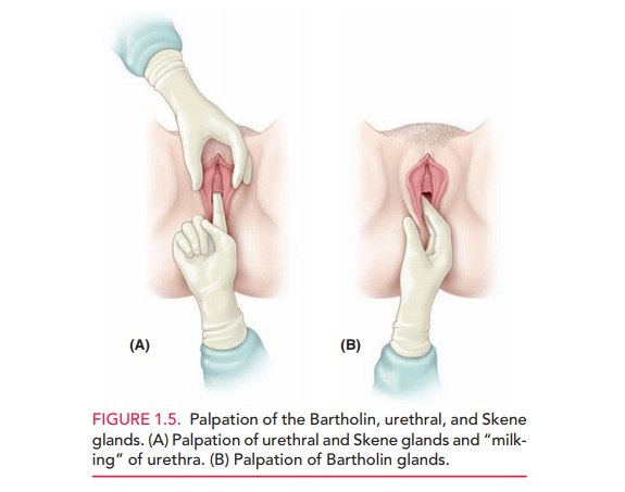 Inspection and Examination of the External Genitalia
