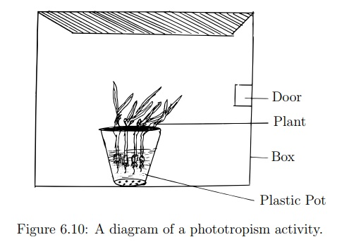 Investigate the Effects of Phototropism
