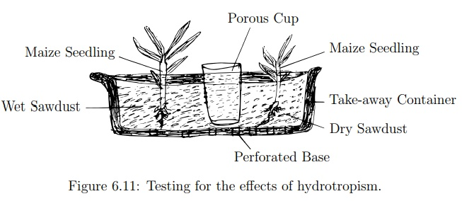 Investigation of the Effects of Hydrotropism