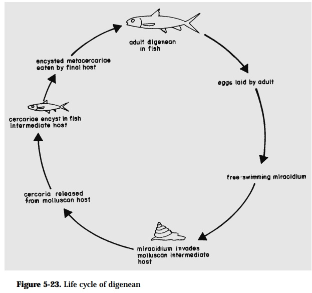 Life Cycle Patterns of Fish Parasites