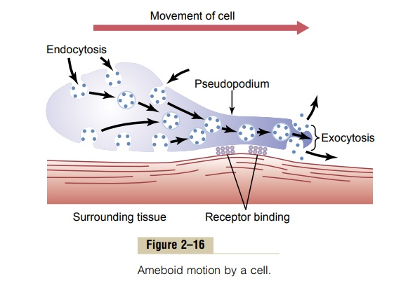 Locomotion of Cells