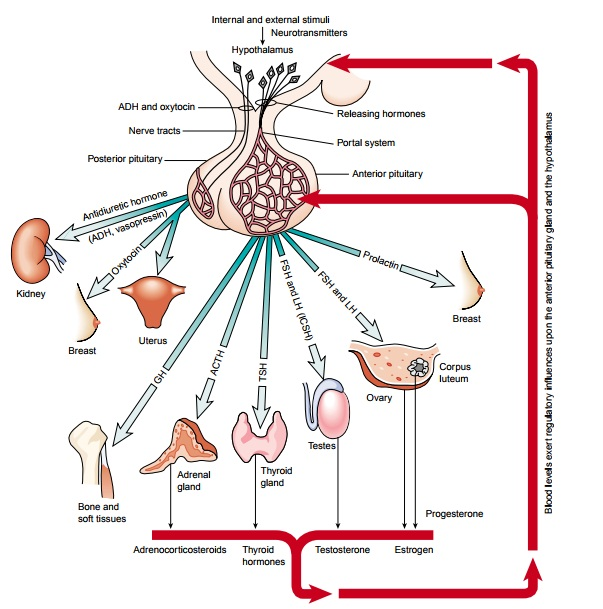 Management of Patients With Pituitary Disorders