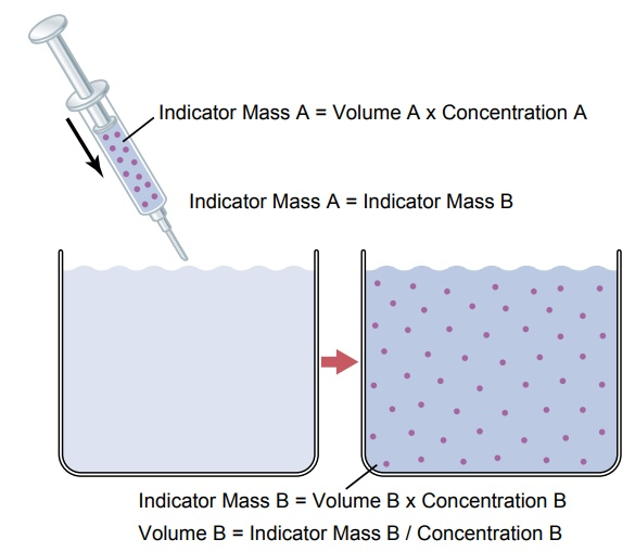 Measurement of Fluid Volumes in the Different Body Fluid Compartments-The Indicator-Dilution Principle