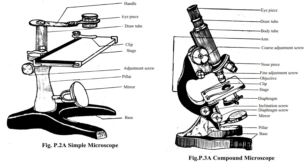 Microscope: Structure, Uses, Functioning Processes of Simple , Compound Microscope