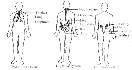 Necessary Organs of Human Body