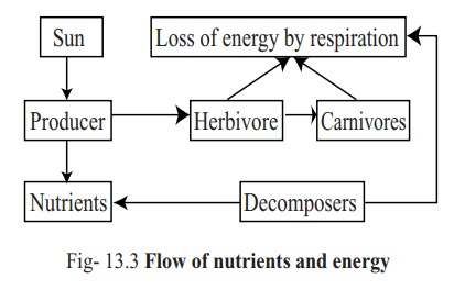 Nutrient flow in Eco system