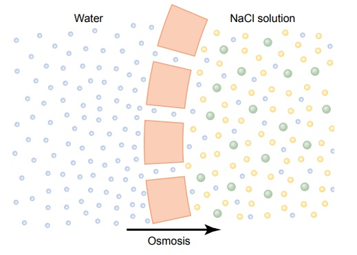 "Osmosis Across Selectively Permeable Membranes - ""Net Diffusion"" of Water"