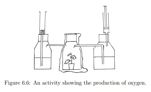 Oxygen as a By-product of Photosynthesis