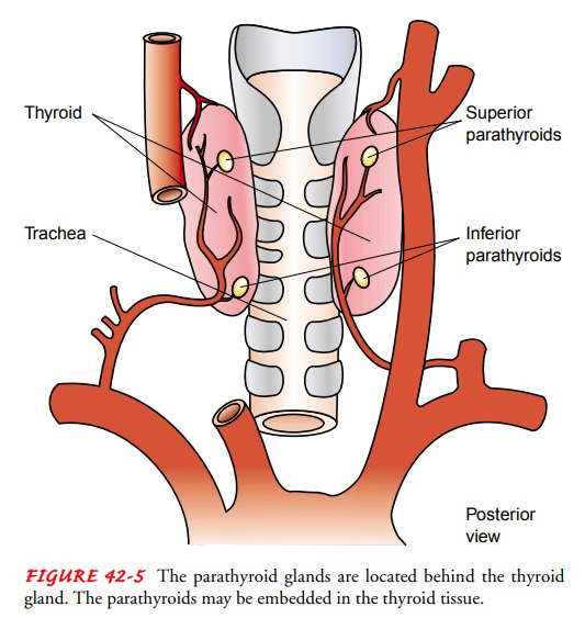 Parathyroid Function - Management of Patients With Parathyroid Disorders