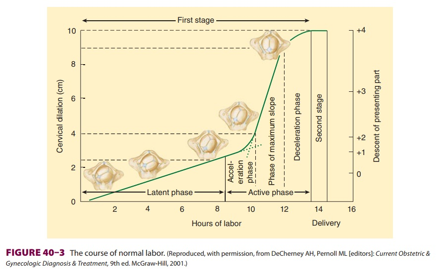 Physiology of Normal Labor