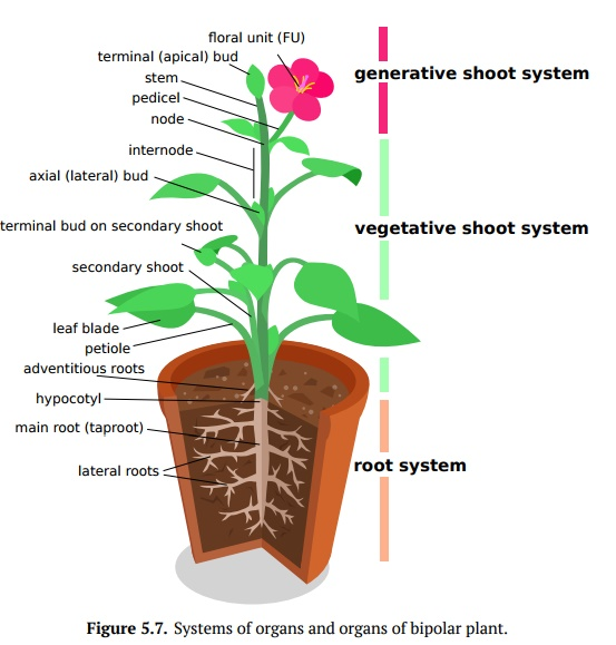 Plant Organs and Organ Systems