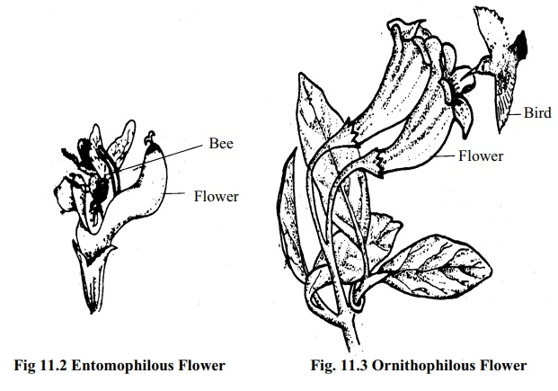 Pollinating Agents: Types and Characteristics