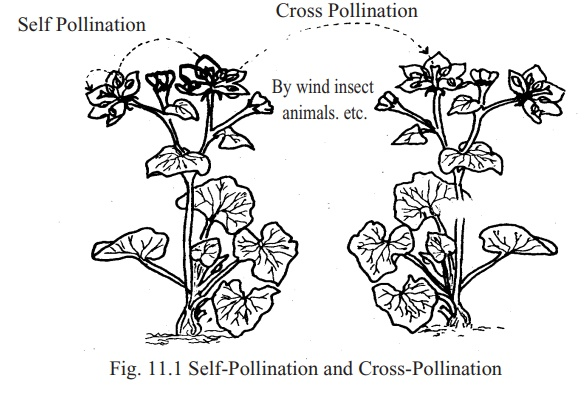 Pollination: Two types, Significance, Merits, Demerits