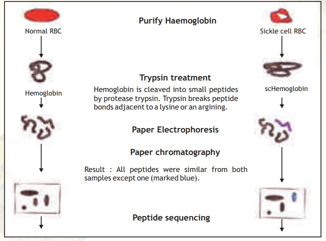Protein Finger printing- Peptide Mapping