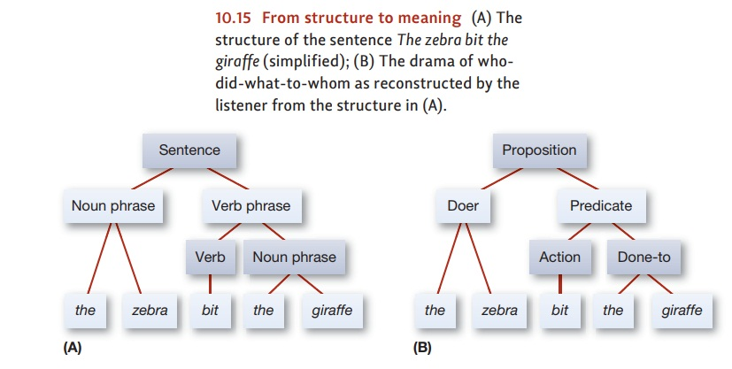 Psychology Language: The Meanings of Sentences