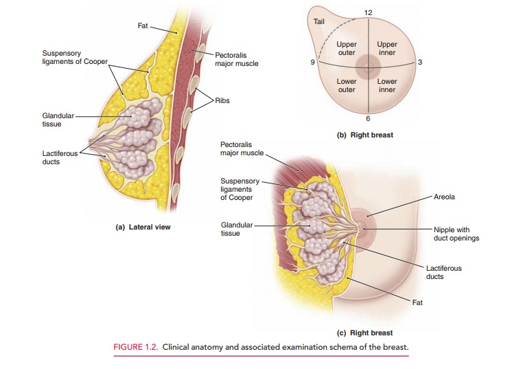 Review of Systems - Obstetrics and Gynecology